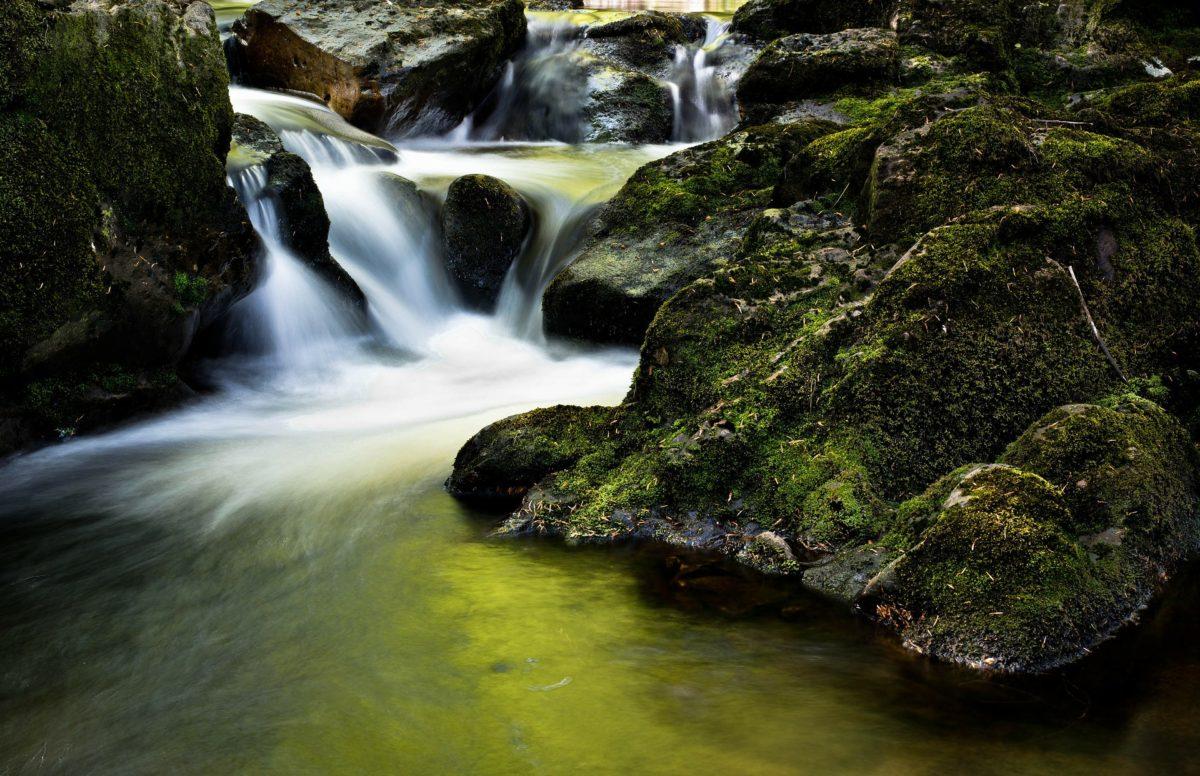 Grow Mindfulness through Nature