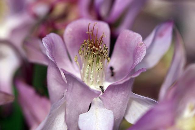 Clarity through Mindfulness